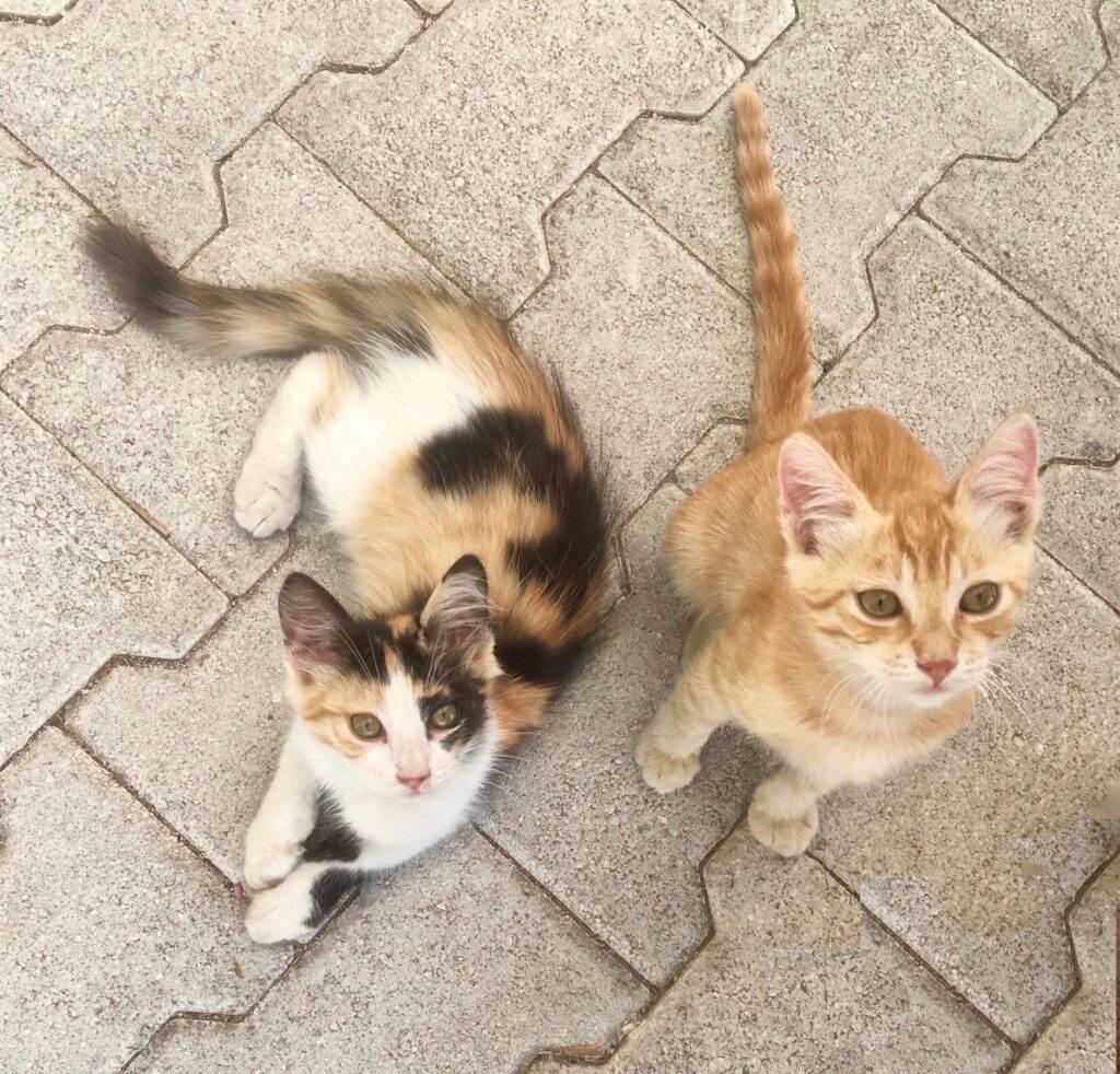 Kittens in Corfu, Greece.